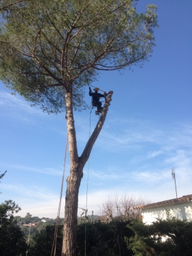 Podes i tales - Podas y talas - Pruning and felling - ESPAIS EXTERIORS